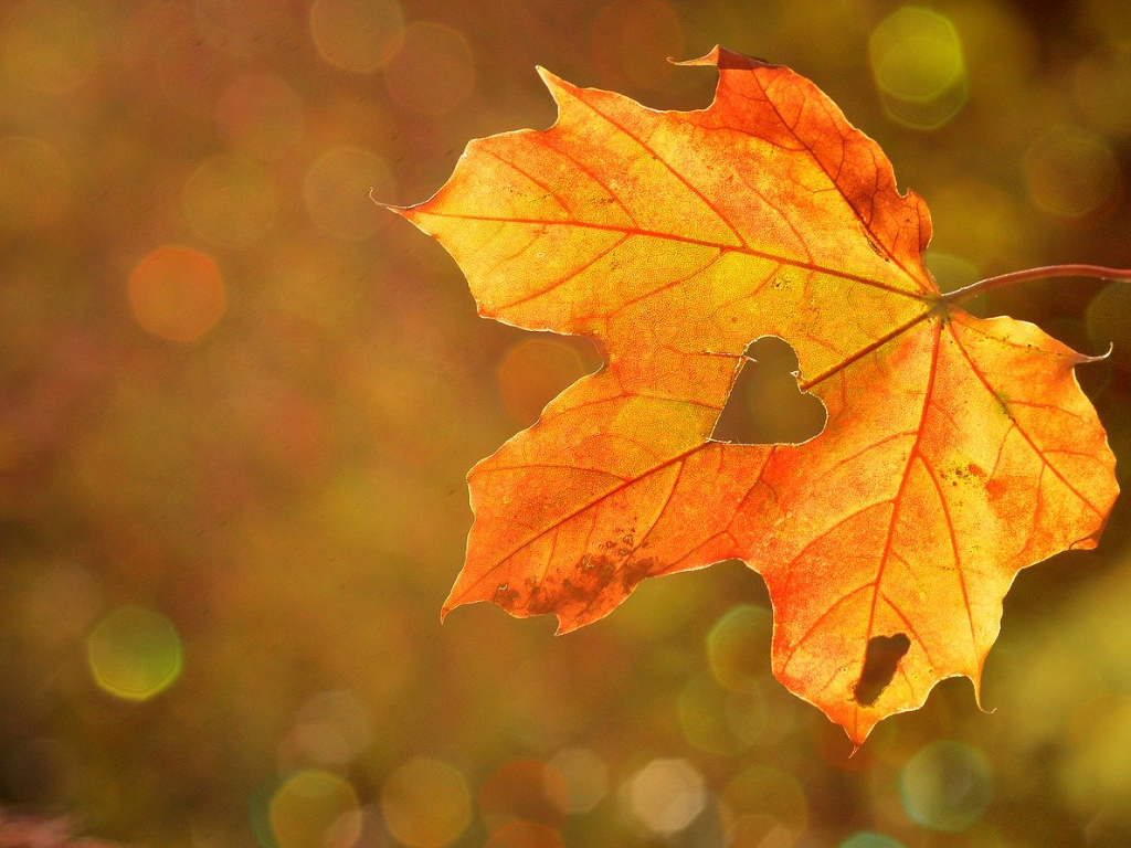 Blatt im Herbst GGS Walheim